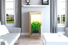 Wähle die Farbe, die am besten mit deiner Einrichtung harmoniert. Ob du die urban Chili Growschrank als Bausatz oder fertig montiert geliefert bekommst kannst du dir auch aussuchen. Chili, Hemp, Timer Clock, Ad Home, Colour, Chile, Chilis
