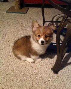 Little baby! How precious