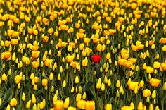 Don't be afraid to stand out ... it's good to be different!