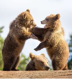 """That's right! I said you have Bear Breath!"""