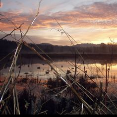 Sunrise in the Duck Blind - WA State
