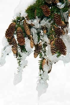 Cones on ice Photograph - Frank Townsley