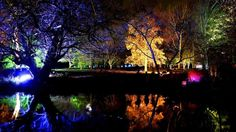 For four weekends in November, the trees in Syon Park's arboretum are illuminated to create a magical wintery walk for plebs to enjoy after dark. The stroll takes about an hour and afterwards you can warm up with a indulgent mug of hot chocolate in The Refectory. Full details: http://www.timeout.com/london/attractions/the-enchanted-woodland-2013