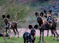 Ruaha National Park-Mikumi National Park 4 nights 5 days Africa safari