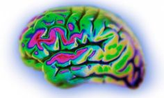 Yeasts and moulds were found in grey matter and blood vessels of all the dementia patients studied. By contrast, the brains of healthy people were free of fungi. Alzheimer's disease may be targeted with antifungal treatment.
