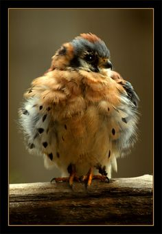 Bird of feathers.