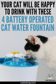 Your Cat Will Be Happy to Drink with these 4 Battery Operated Cat Water Fountain - CatLicking