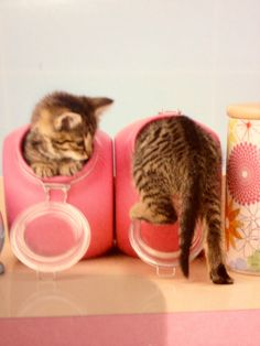 Cheezburger is THE location to find your funny pictures and memes of online cats and animals - oh, and gifs too Kittens Cutest, Cats And Kittens, Kittens Playing, I Love Cats, Cute Cats, Funny Animals, Cute Animals, Funny Pets, Image Chat