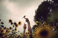 bird, flower, free, girassois, girassol, jardim, liberdade, passarinhos…