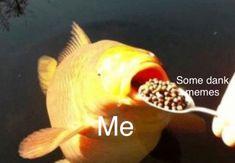 Yum yum yum dank memes are my favorite food