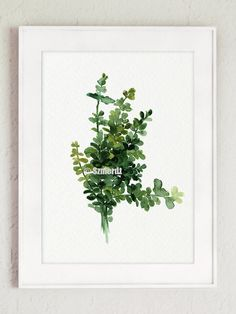 Thyme Set of 2 Watercolor Painting Botanical Artwork Green