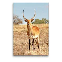 Kangaroo, Giraffe, Artworks, Portraits, Wall Art, Animals, Color, Black, Africa