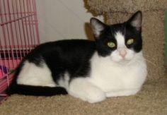 Kindred Kitties wishlist — Kenosha area