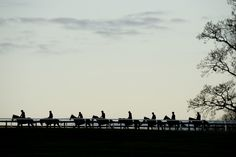 Dan Skelton's first lot walk onto the gallops at Lodge Hill.