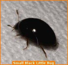 Pin On Beetles