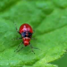 Thoughtful Planting: Gardening Tips to Keep Bugs at Bay - In the Garden - Mother Earth Living