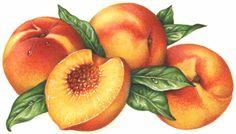 peach fruit | FRUIT BASKET BANANA ORANGE LIME/LEMON PEACH PINEAPPLE APPLE GRAPES ...