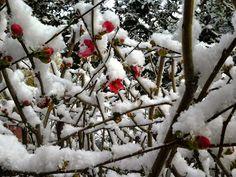 Nieve en el Valle de Lecrín. Así esta el Jardín Müller en el pueblo de Nigüelas hoy. Una bella estampa invernal. En una próxima entrada os hablaré de este singular y bonito jardín. http://on.fb.me/1Atexsx Por ahora disfrutad de este precioso imagen de +Jardín Müller  Compartido por Susan de www.casatagomago.com