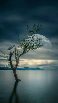 Lovely. Heron and moon.