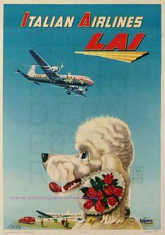 Jet Set Poodle - 1955 ITALIAN AIRLINE LAI
