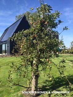 Foto van een oude appelboom/ oude fruitboom bij een moderne schuurwoning uit het assortiment van Schouten Bomen & Loonbedrijf Modern, Trendy Tree