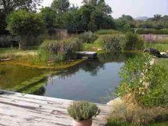 Natural Pools – Natural Pond – Natural Swimming Ponds by Rin Robyn . Swimming Pool Pond, Natural Swimming Ponds, Swiming Pool, Natural Pond, Ponds Backyard, Backyard Landscaping, Pond Water Features, Pond Design, Backyard Paradise