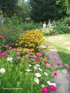 summer perennials for border flower beds: black-eyed susans, zinnias, cosmos, and yarrow.