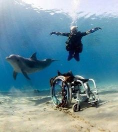 Adaptive diving! >>> See it. Believe it. Do it. Watch thousands of spinal cord injury videos at SPINALpedia.com