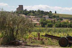 Chateauneuf du Pape Wine Tours Wine tasting