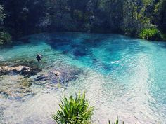 Ichetucknee River and Springs in Florida State Park