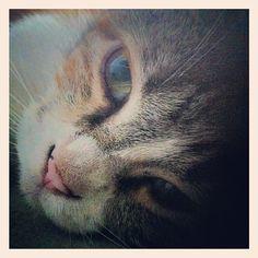 Friendly cute tubby cat!