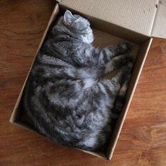 Katze am Morgen vertreibt Kummer und Sorgen. :-)