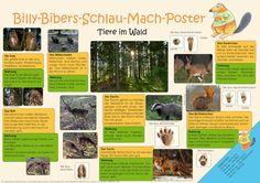 Billy-Bibers-Schlau-Mach-Poster   Tiere im Wald
