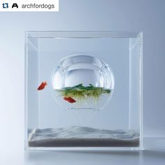 #Repost @archfordogs  Waterscape 水中風景 exhibition by #archfordogs participant @misawasami currently on display at Taipei LinkLion. #三澤遙 #waterscape #水中風景 by moco_loco