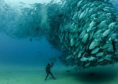 """Best Of """"Photo of the Day"""" – National Geographic"""