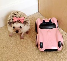 If only my hedgie would wear a bow! :)