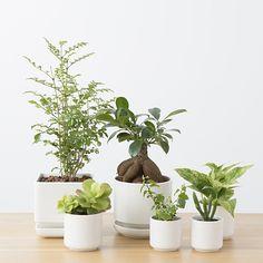 smile, you Ficus Microcarpa, Indoor Plants, Flower Pots, Planting Flowers, Greenery, Planter Pots, Garden, Smile, Board