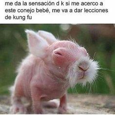 Si Sensei, jajajajaja #memes #chistes #chistesmalos #imagenesgraciosas #humor http://www.megamemeces.com/memeces/imagenes-de-humor-vs-videos-divertidos