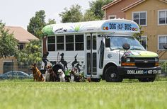 Look at these stellar Enrichment dogs! Waiting for the release from the Dog Bus! Campus Blog — University of Doglando