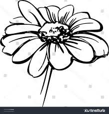 Image result for wild flower drawing