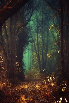 Mystic Fairy Tale Forest The Netherlands Fairy Tale Forest, Mystical Forest, Forest Path, Fairy Tales, Night Forest, Forest Trail, Woodland Forest, Dark Forest, Creation Image