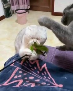 Ooops 😂 – youthful On pets , animals , animals love , stuff animal , animals Funny Cute Cats, Funny Animal Memes, Cute Cats And Kittens, Funny Cat Videos, Cute Funny Animals, Kittens Cutest, Cute Dogs, Cute Animal Videos, Cute Animal Pictures