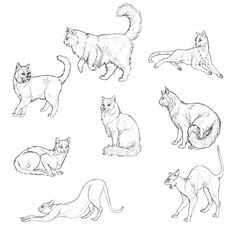 How to Draw Cats: Monika Zagrobelna's Detailed Approach — Monika Zagrobelna shows how to draw cats — everything from basic anatomy to all the little details that make cat drawings more realistic.