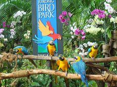 Jurong Bird Park é um atração turística em Singapura gerida pela Wildlife Reserves Singapore . É um parque paisagístico, construído na encosta ocidental da Colina Jurong. Ele está localizado dentro da Área de Planejamento Boon Lay da Jurong distrito e tem uma área de 202 mil metros quadrados (50 hectares).