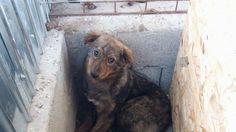 Petition against the killings of Rumanian Dogs. Please sign & share widely!  -  Diese Petition richtet sich an das nationale Veterinärwesen der rumänischen Regierung.   Seit Jahren ändert sich am nichts an der Situation der streunenden Hunde in Rumänien, weil es keine Kastrationspflicht gibt und keine Strafe, wenn Hunde ausgesetzt werden. Daher vermehren sie sich unkontrolliert...  951/16.5.17