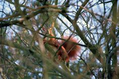 Neugieriges Eichhörnchen Foto by Dara Morgen
