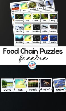 So our students can show what they know I've created these Food Chains Puzzles. This helps our preschool, kindergarten, and first-grade students learn and review food chains in a hands-on way. Kindergarten Freebies, Kindergarten Science, Teaching Science, Elementary Science, Science Classroom, Food Chain Activities, Science Activities, Montessori Activities, Science Ideas