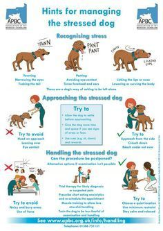 Recognizing the signs of a stressed dog. Learn more about what behaviors indicate your dog might be anxious