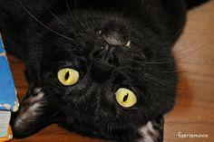 Sushi-Ball #blackcats
