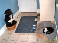 Who rules the roost in this house hold? Its usually the cat.  Cats rule!